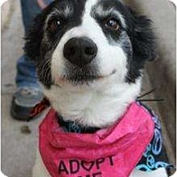 Adopt A Pet :: Nana - Arlington, TX