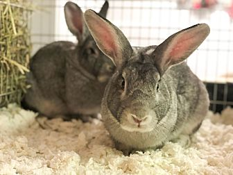 Adopt A Pet :: Liam  - Moose Jaw, SK