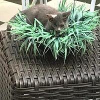 Adopt A Pet :: Gail - Hudson, NY