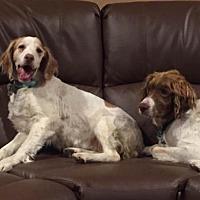 Adopt A Pet :: OH/Meg & Stewie - Erie, PA