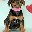 Adopt A Pet :: Brady