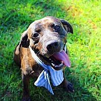 Adopt A Pet :: Taylor - Fort Valley, GA