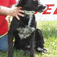 Adopt A Pet :: Kate - Grayson, LA