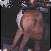 Adopt A Pet :: Homer - Riverside, CA