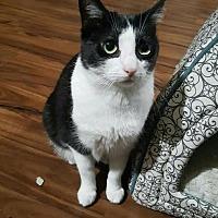 Adopt A Pet :: Stella (bonded to Luna) - Los Angeles, CA
