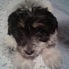 Adopt A Pet :: Tera (adoption pending)