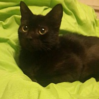 Adopt A Pet :: Monkey - Oviedo, FL