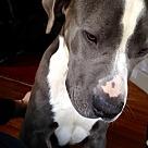 Adopt A Pet :: Titus (COURTESY POST)