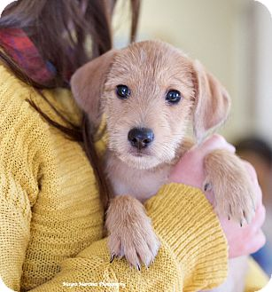 Terrier (Unknown Type, Small) Mix Puppy for adoption in Nashville, Tennessee - Skippy Jon