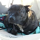 Adopt A Pet :: Jacky