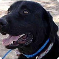 Adopt A Pet :: Jethro - Houston, TX