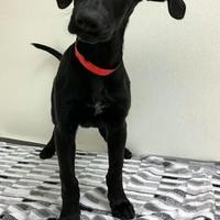 Adopt a pet near you   PetSmart Charities