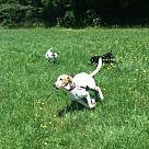 Adopt A Pet :: Wimbley