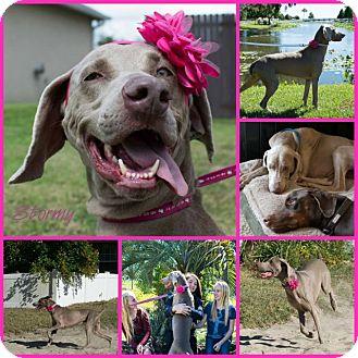 Inverness Dog Adoption