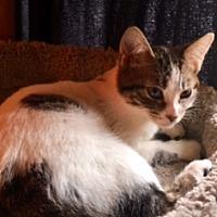 Adopt A Pet :: Anna - Fort Worth, TX