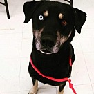 Adopt A Pet :: Damon