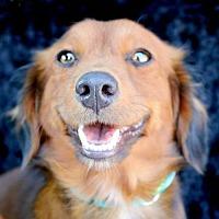 Adopt A Pet :: Sam Houston - Houston, TX