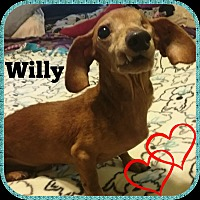 Adopt A Pet :: Willy - Green Cove Springs, FL