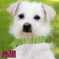 Adopt A Pet :: Professor - Marina del Rey, CA