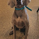 Adopt A Pet :: William~adopted!