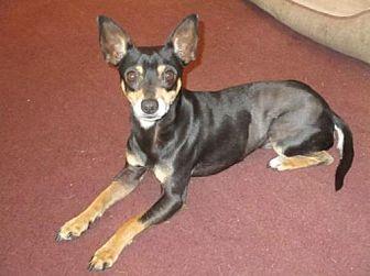 Adopt A Pet :: Wyatt  - Camden, SC