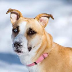 Puppies for Sale in Calgary Alberta - Adoptapet com