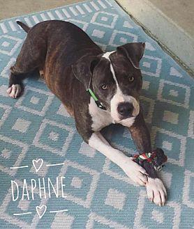 Adopt A Pet :: Daphne  - Mobile, AL