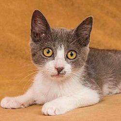 Available pets at Yolo County SPCA in Davis, California
