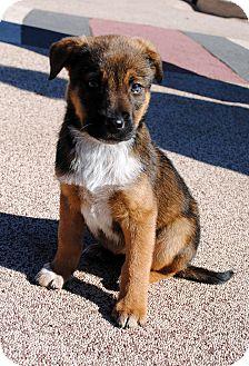 Phoenix Az Bluetick Coonhound Meet Merry A Pet For Adoption