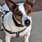 Adopt A Pet :: Bing