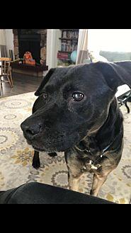 Adopt A Pet :: Baby  - Anchorage, AK