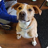 Adopt A Pet :: Leo - Newtown, CT