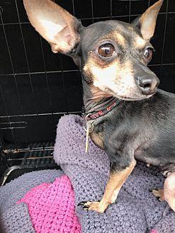 Adopt A Pet :: Urgent, Urgent!!  - Ft Myers Beach, FL