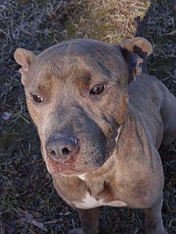 Adopt A Pet :: Buck  - Henderson, NC