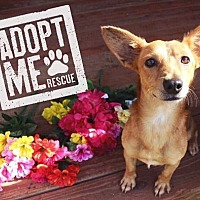 Adopt A Pet :: Odie - Fort Valley, GA