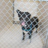 City Of Temple Tx Animal Shelter In Temple Texas