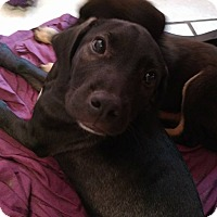Adopt A Pet :: Chester - Tampa, FL