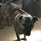 Adopt A Pet :: Zues