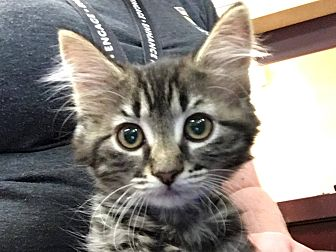 Adopt A Pet :: Fletcher  - Edmonton, AB