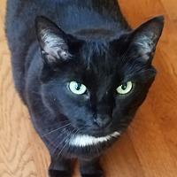 Adopt A Pet :: Kuli (COURTESY POST) - Baltimore, MD