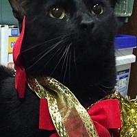 Adopt A Pet :: Jack - Seabrook, NH