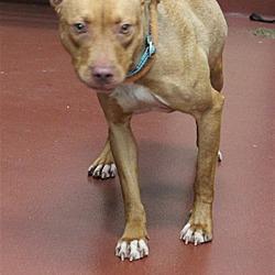 Puppies for Sale in Salisbury Maryland - Adoptapet com