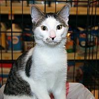 Adopt A Pet :: Larry - Rochester, MN