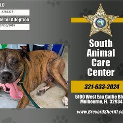 Brevard County Sheriffs Office Animal Services South Animal Care