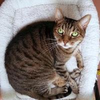 Adopt A Pet :: Tigger - Hastings, MN