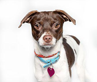 Adopt A Pet :: Martin  - Houston, TX