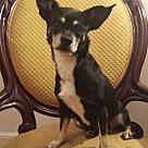 Adopt A Pet :: Maxine