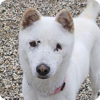 Jindo Dog Rescue