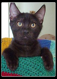 Malik (Adoption Pending)