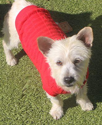 Norwalk Ct Dog Adoption